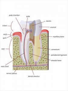 apicoectomy and root canal surgery in Orem and Provo